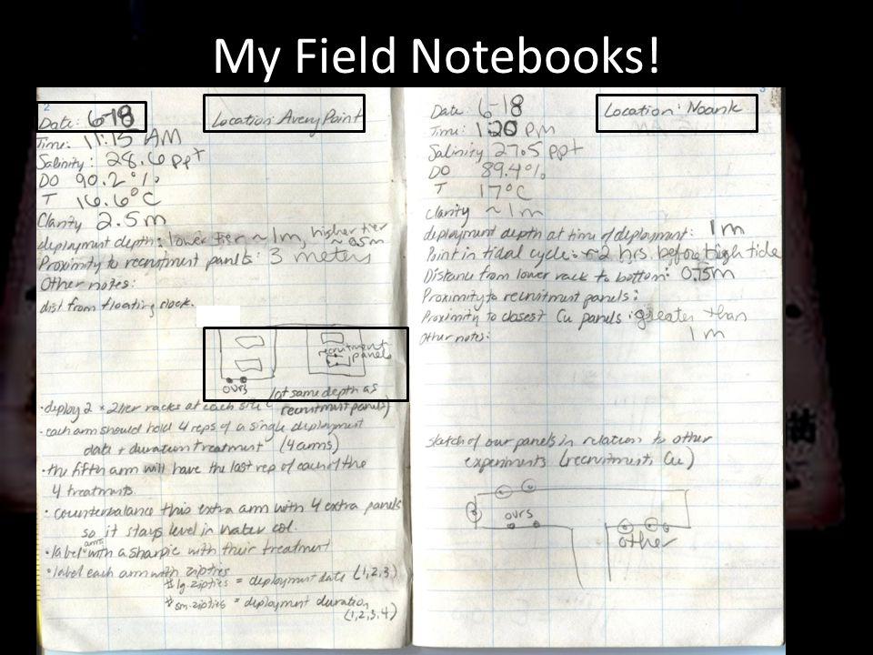 My Field Notebooks!