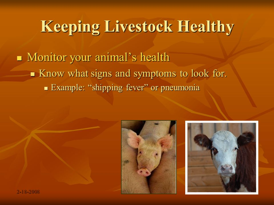 2-18-2008 Keeping Livestock Healthy Monitor your animal's health Monitor your animal's health Develop a routine for checking your animal Develop a routine for checking your animal If your animal doesn't come for feed, If your animal doesn't come for feed, don't ignore it… check on it.