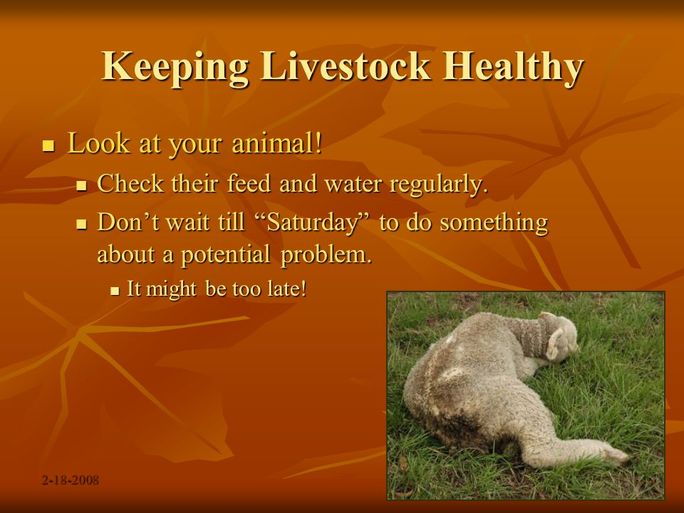 2-18-2008 Keeping Livestock Healthy Be prepared Be prepared Learn what your animal's normal temperature should be.