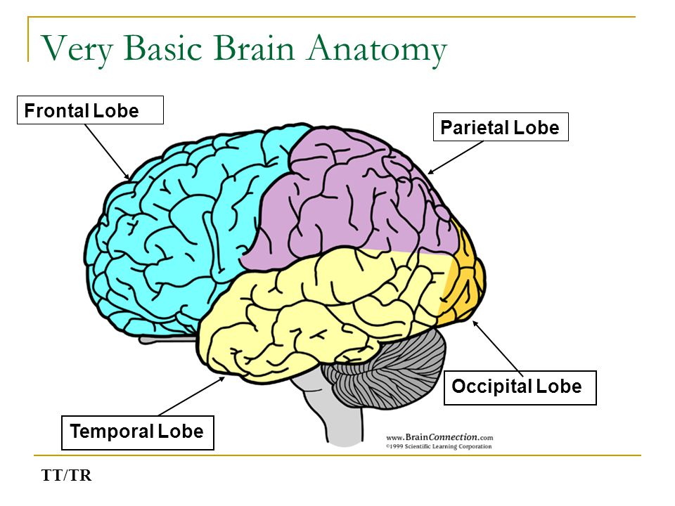 Why do tutors need to know about the brain.