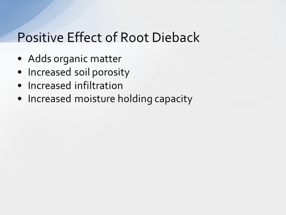 Adds organic matter Increased soil porosity Increased infiltration Increased moisture holding capacity Positive Effect of Root Dieback