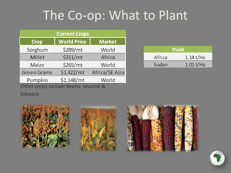 The Co-op: What to Plant