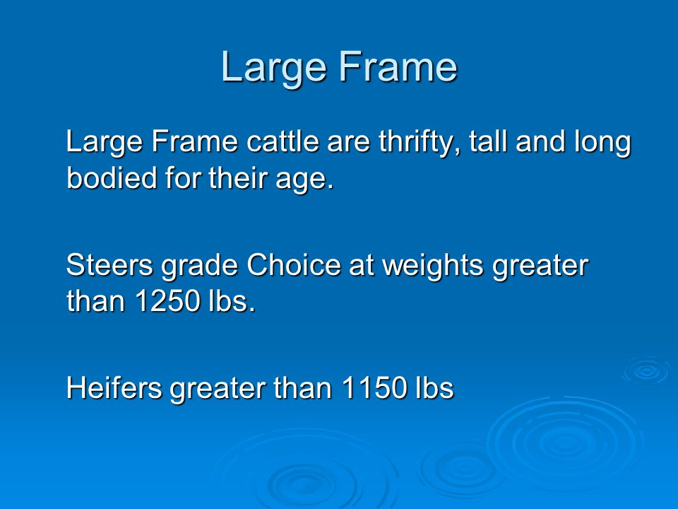 Large Frame Large Frame cattle are thrifty, tall and long bodied for their age.