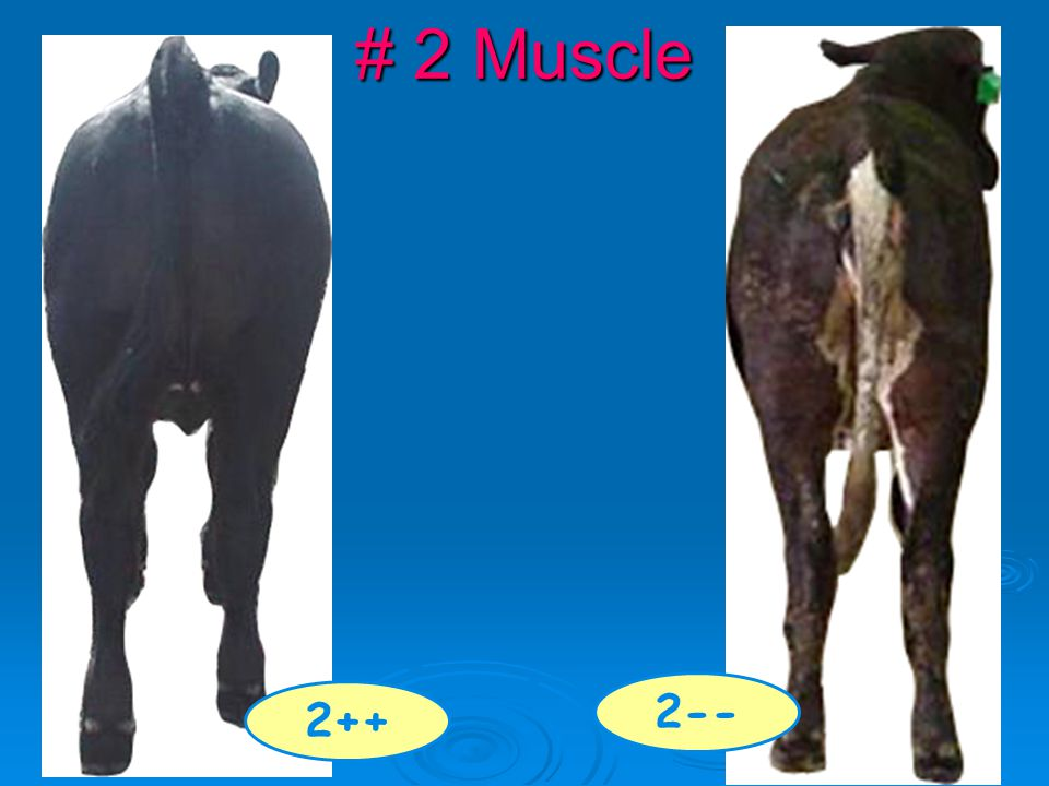 # 2 Muscle