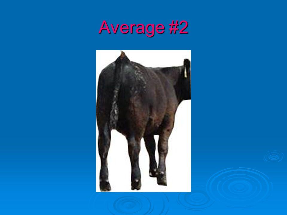 Average #2