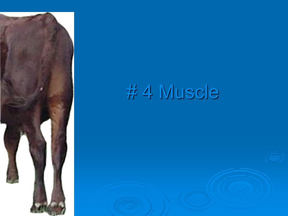 # 4 Muscle