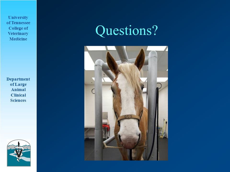 University of Tennessee College of Veterinary Medicine Department of Large Animal Clinical Sciences Questions?