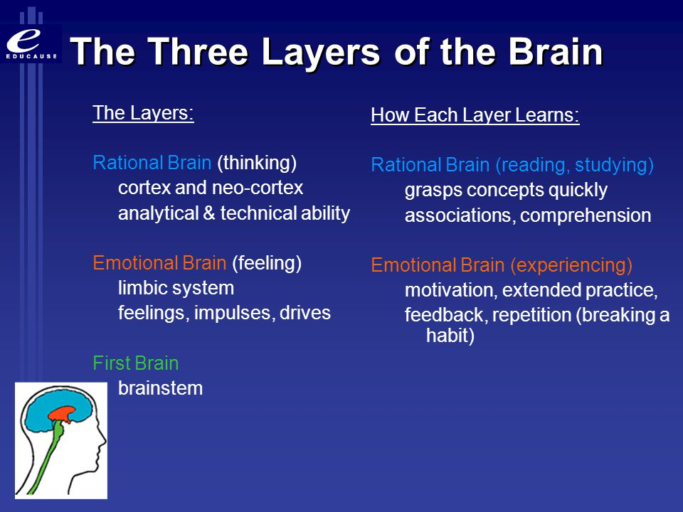 The Three Layers of the Brain The Layers: Rational Brain (thinking) cortex and neo-cortex analytical & technical ability Emotional Brain (feeling) lim