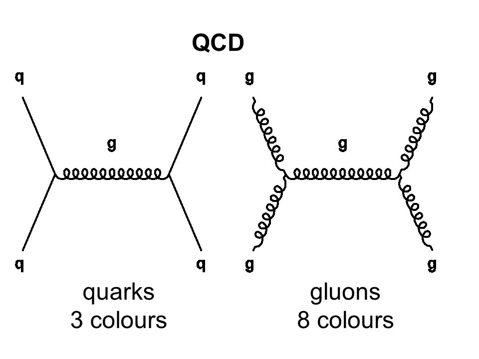 QCD gluons 8 colours quarks 3 colours