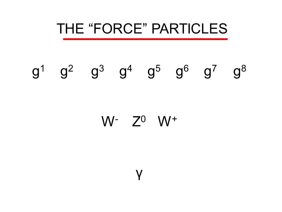 "THE ""FORCE"" PARTICLES g 1 g 2 g 3 g 4 g 5 g 6 g 7 g 8 W - Z 0 W + γ"