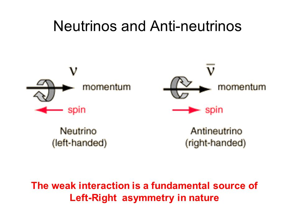 Neutrinos and Anti-neutrinos The weak interaction is a fundamental source of Left-Right asymmetry in nature