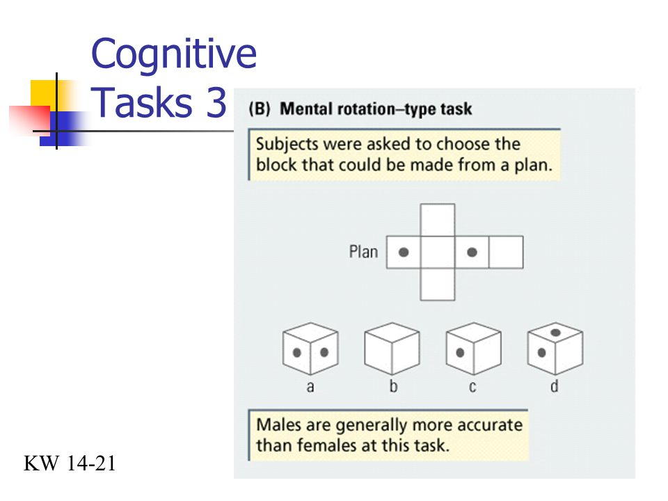 Cognitive Tasks 3 KW 14-21