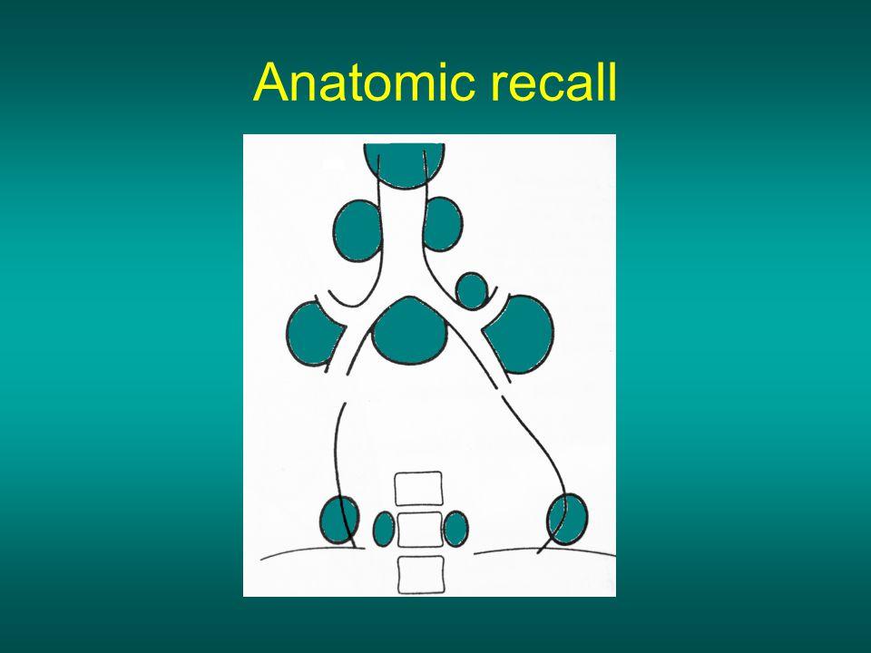 Anatomic recall