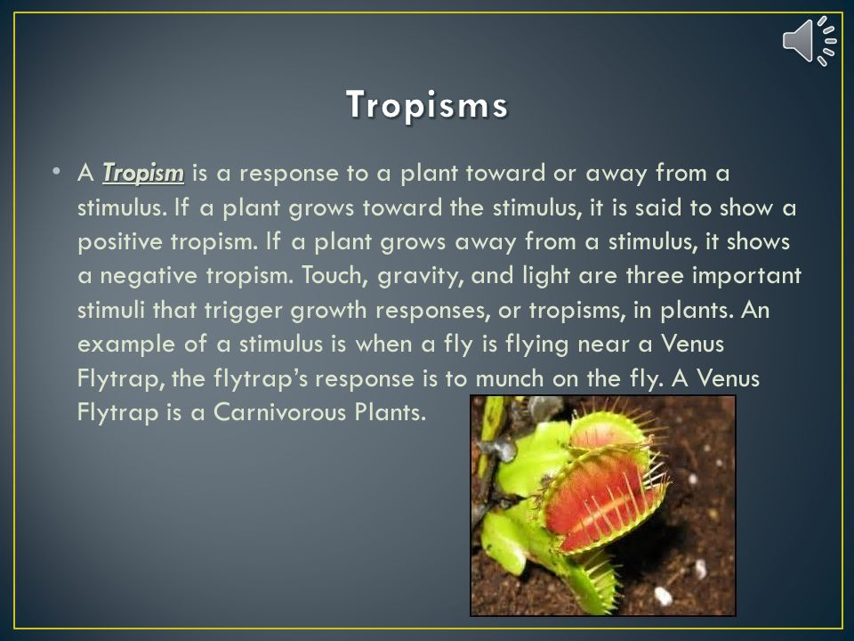 What are three stimuli that produce plant responses? Tropisms, hormones, and Auxin