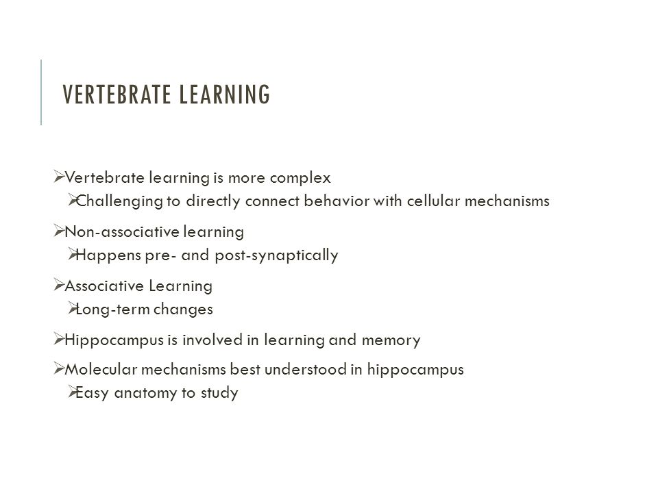 VERTEBRATE LEARNING  Vertebrate learning is more complex  Challenging to directly connect behavior with cellular mechanisms  Non-associative learning  Happens pre- and post-synaptically  Associative Learning  Long-term changes  Hippocampus is involved in learning and memory  Molecular mechanisms best understood in hippocampus  Easy anatomy to study