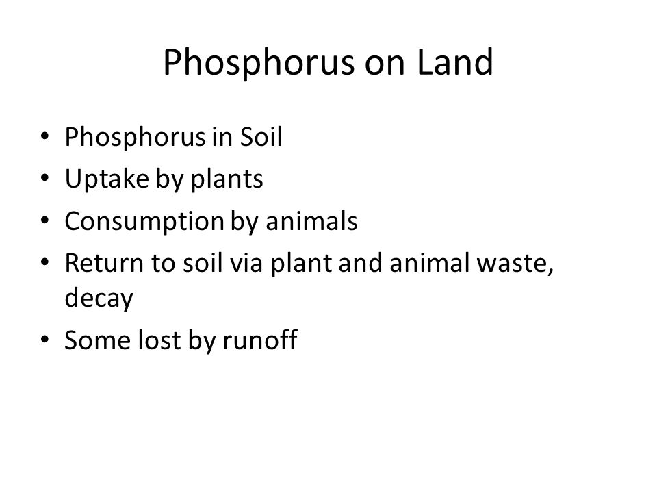 Phosphorus on Land Phosphorus in Soil Uptake by plants Consumption by animals Return to soil via plant and animal waste, decay Some lost by runoff
