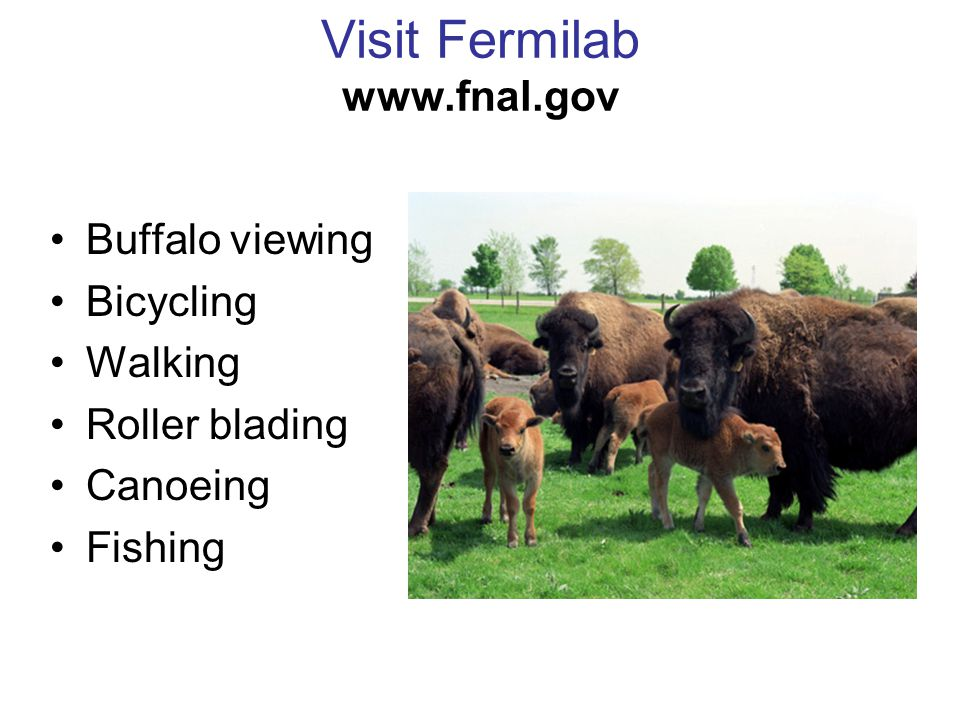 Visit Fermilab www.fnal.gov Buffalo viewing Bicycling Walking Roller blading Canoeing Fishing