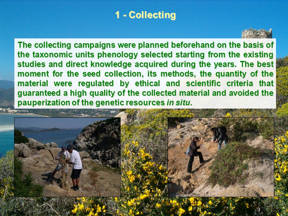 The collecting campaigns were planned beforehand on the basis of the taxonomic units phenology selected starting from the existing studies and direct