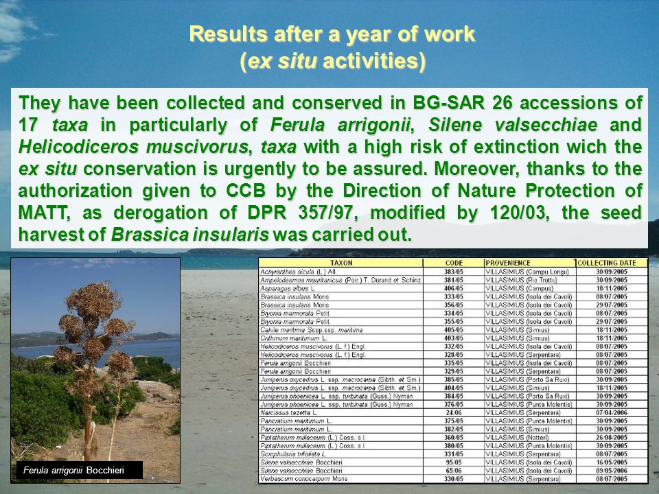 Results after a year of work (ex situ activities) They have been collected and conserved in BG-SAR 26 accessions of 17 taxa in particularly of Ferula