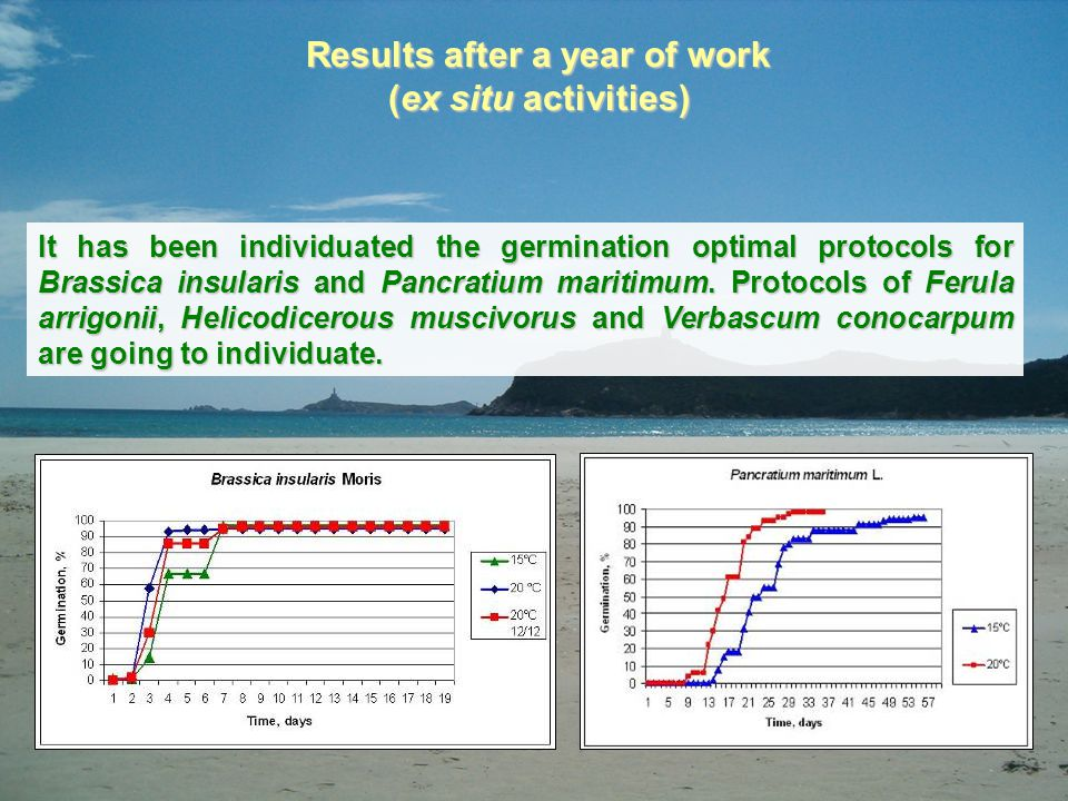 Results after a year of work (ex situ activities) It has been individuated the germination optimal protocols for Brassica insularis and Pancratium mar