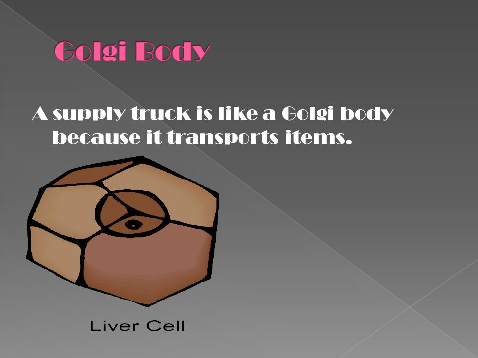 A supply truck is like a Golgi body because it transports items.