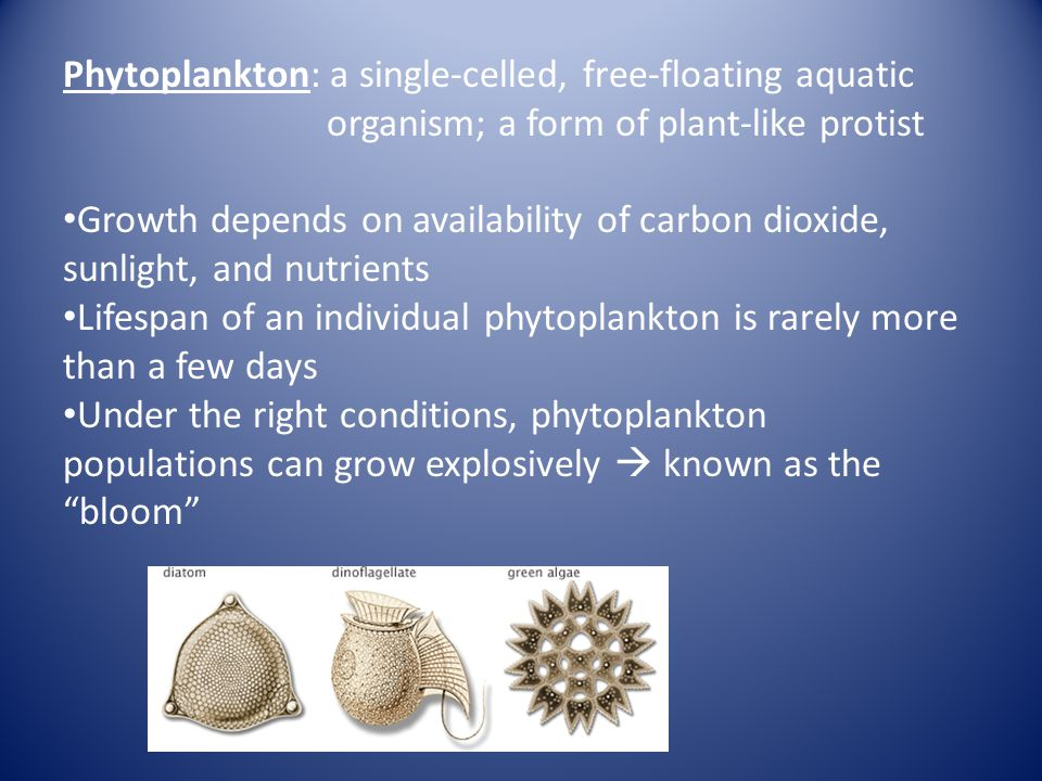 Phytoplankton: a single-celled, free-floating aquatic organism; a form of plant-like protist Growth depends on availability of carbon dioxide, sunligh