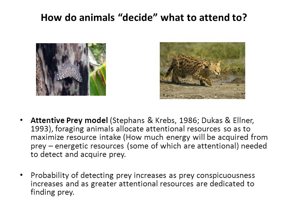 How do animals decide what to attend to.