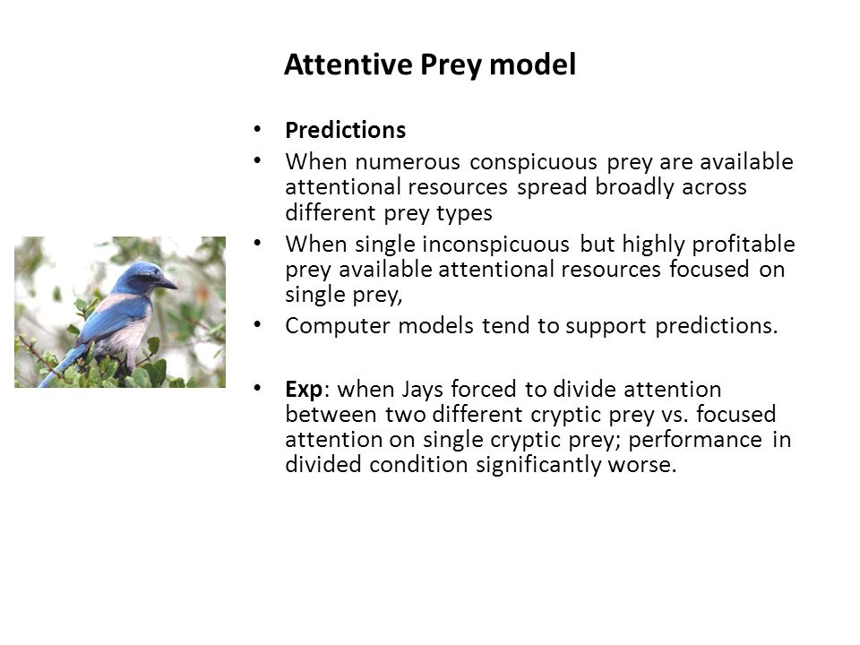 Attentive Prey model Predictions When numerous conspicuous prey are available attentional resources spread broadly across different prey types When si