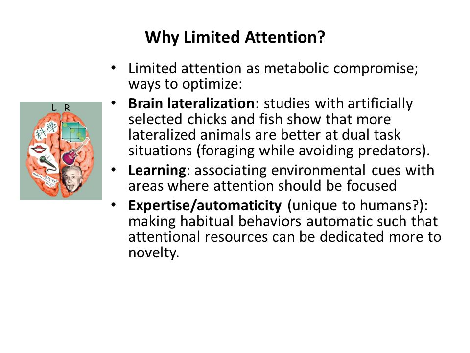 Why Limited Attention.