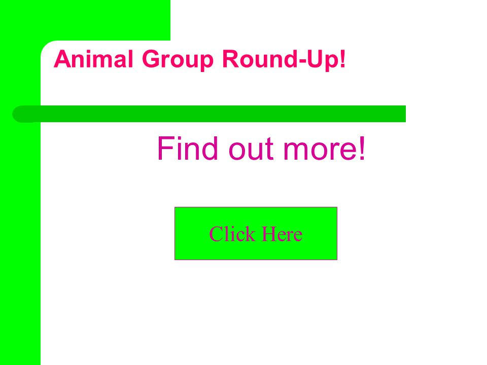 What do you know about animal groups. What do you call… a group of kangaroos.
