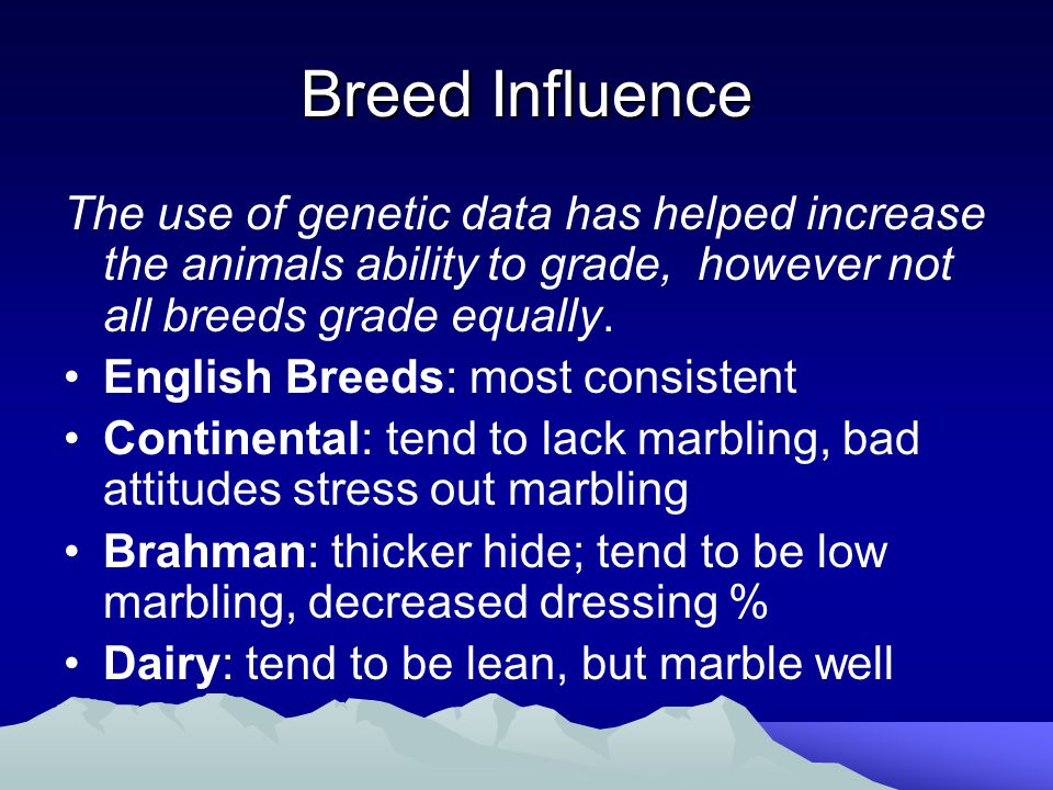 Breed Influence The use of genetic data has helped increase the animals ability to grade, however not all breeds grade equally.