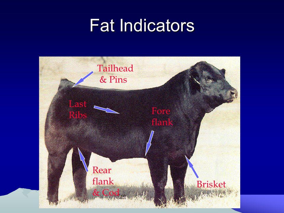 Fat Indicators Tailhead & Pins Last Ribs Brisket Fore flank Rear flank & Cod