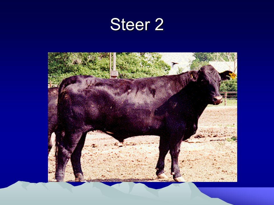 Comparison Steer 1 - Choice Steer 2 - Standard