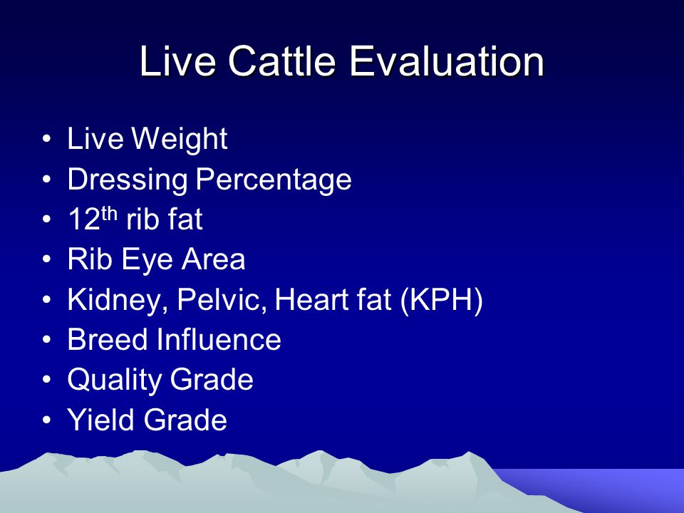 Live Cattle Evaluation Live Weight Dressing Percentage 12 th rib fat Rib Eye Area Kidney, Pelvic, Heart fat (KPH) Breed Influence Quality Grade Yield Grade