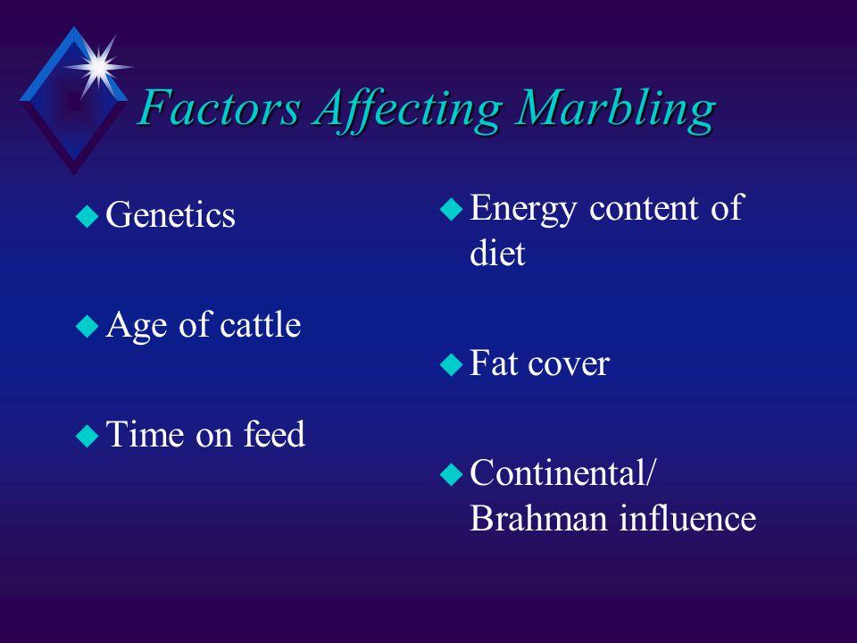 Factors Affecting Marbling u Genetics u Age of cattle u Time on feed u Energy content of diet u Fat cover u Continental/ Brahman influence