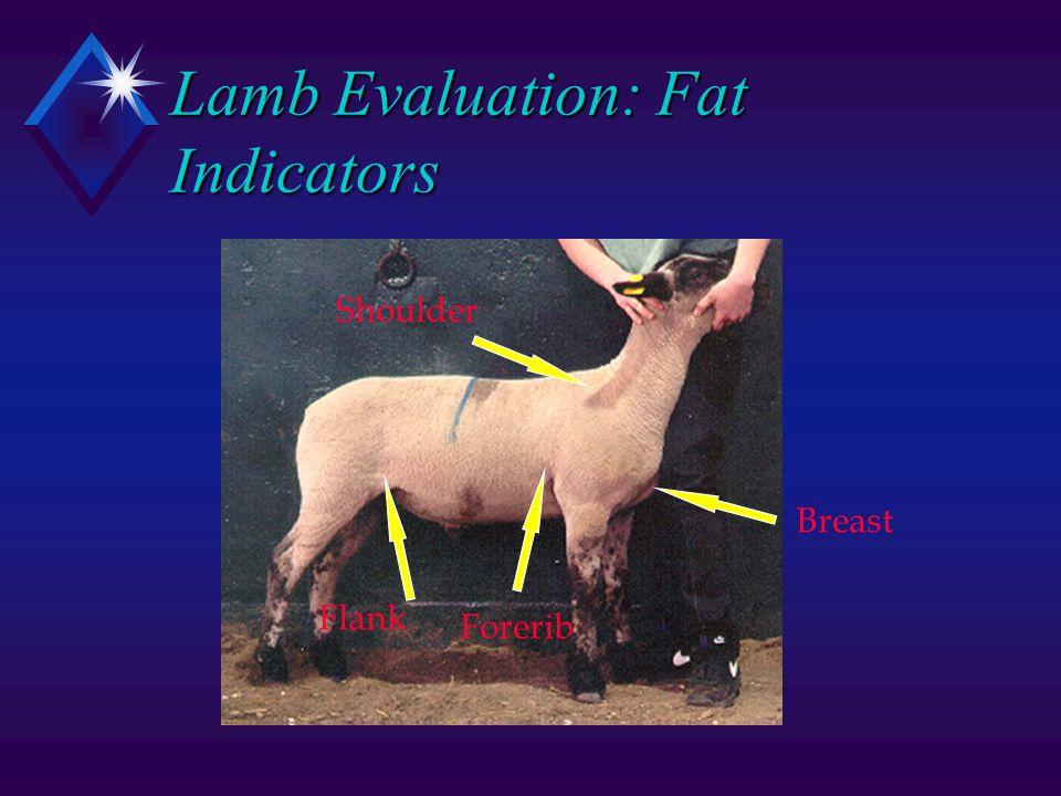 Lamb Evaluation: Fat Indicators Shoulder Breast Forerib Flank