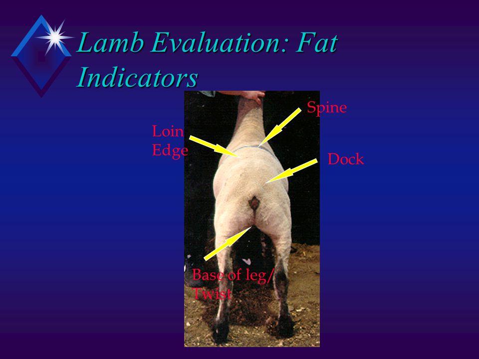 Lamb Evaluation: Fat Indicators Base of leg/ Twist Dock Spine Loin Edge