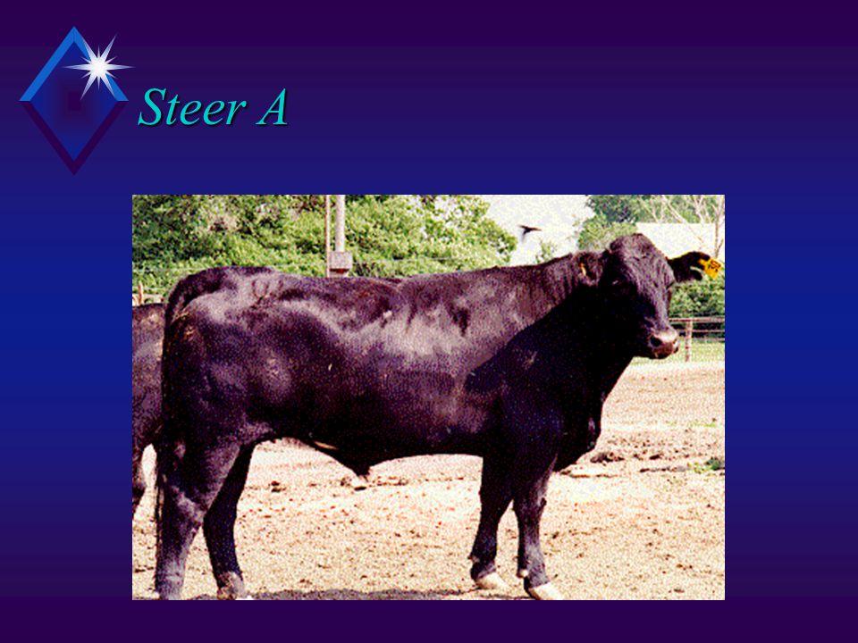 Steer A