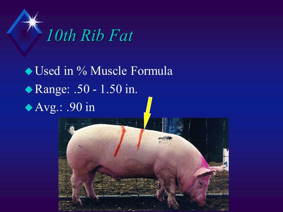 10th Rib Fat u Used in % Muscle Formula u Range:.50 - 1.50 in. u Avg.:.90 in