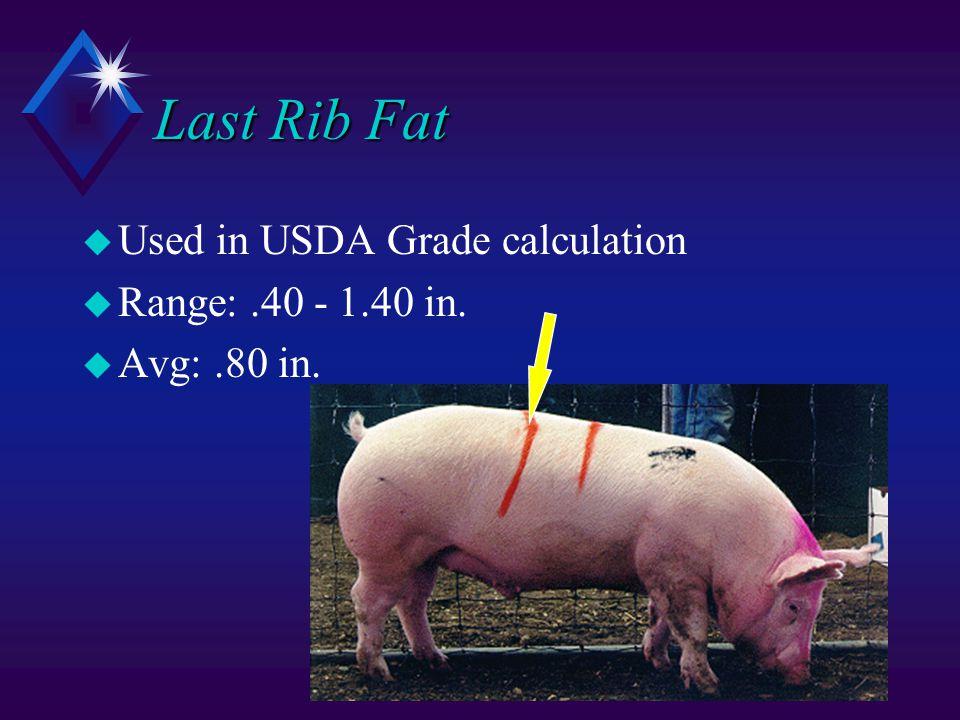 Last Rib Fat u Used in USDA Grade calculation u Range:.40 - 1.40 in. u Avg:.80 in.