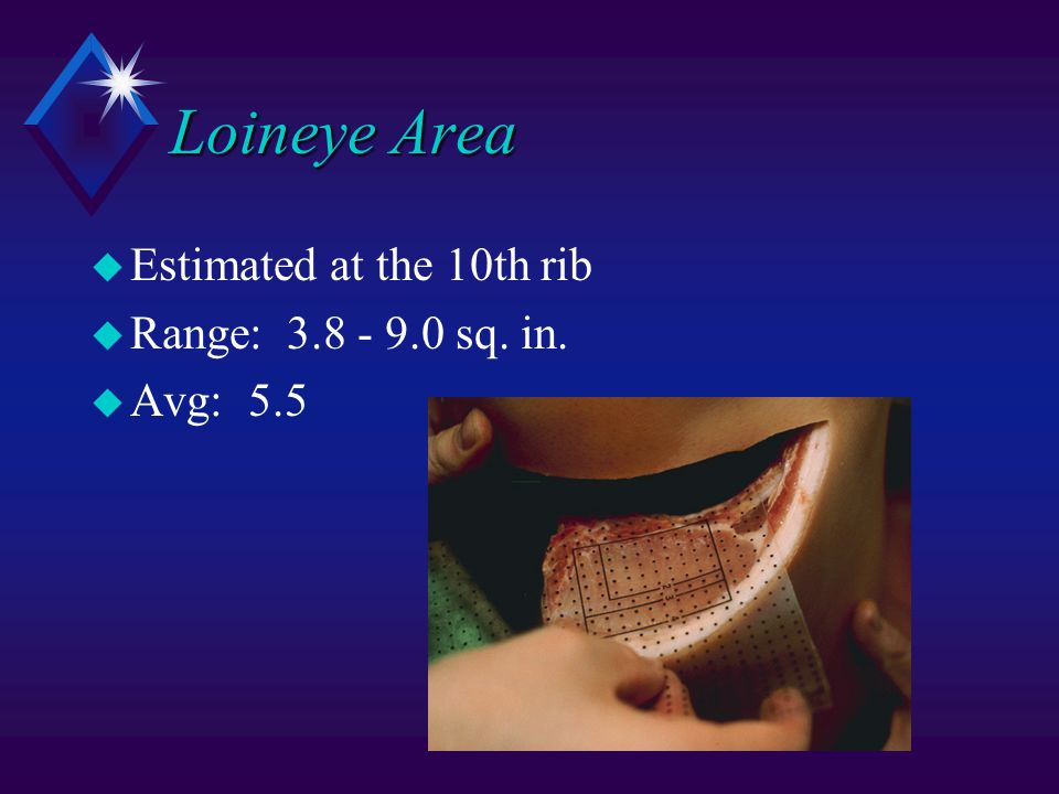 Loineye Area u Estimated at the 10th rib u Range: 3.8 - 9.0 sq. in. u Avg: 5.5