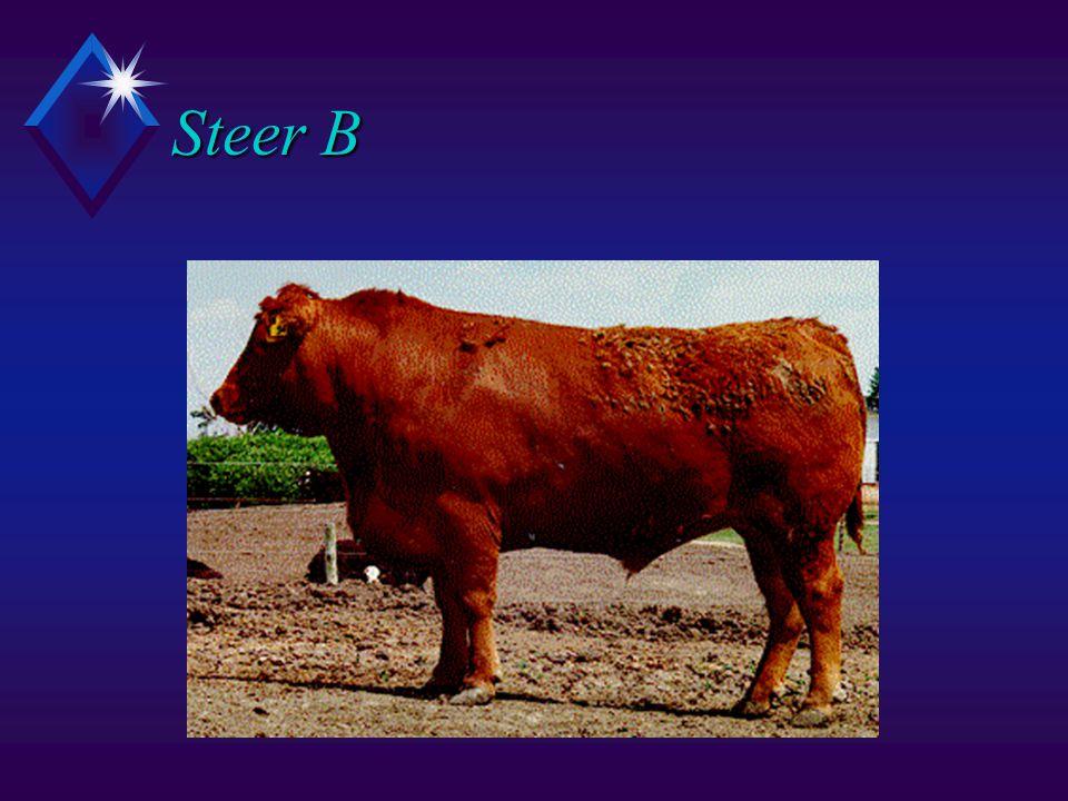 Steer B