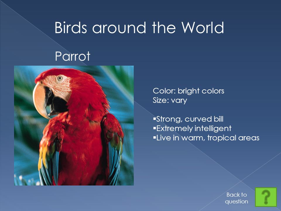 Birds around the World Parrot Color: bright colors Size: vary  Strong, curved bill  Extremely intelligent  Live in warm, tropical areas Back to question