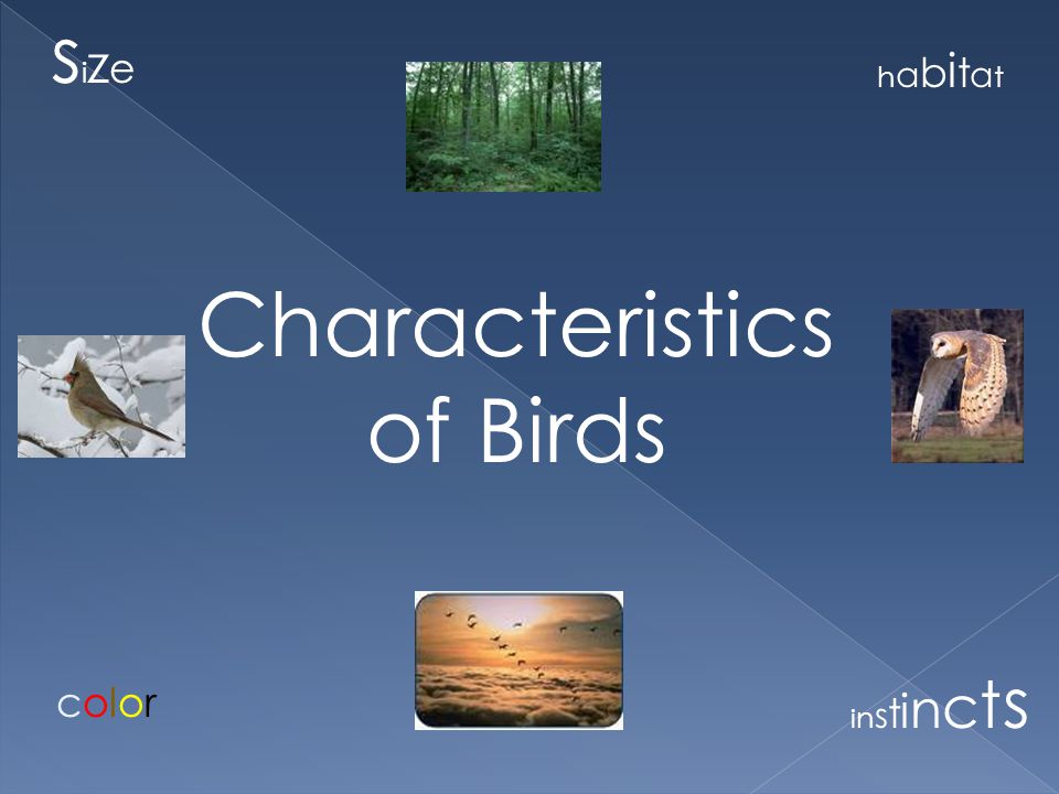 There are many different kinds of birds that live on planet Earth.