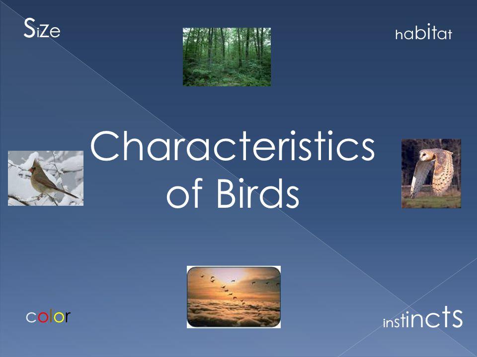 Characteristics of Birds sizesize habitathabitat colorcolor instinctsinstincts