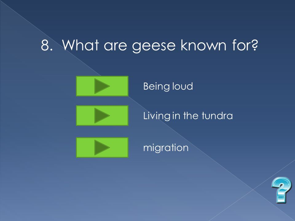 8. What are geese known for Being loud Living in the tundra migration