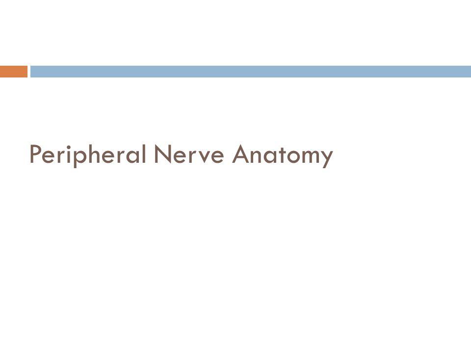 Peripheral Nerve Anatomy