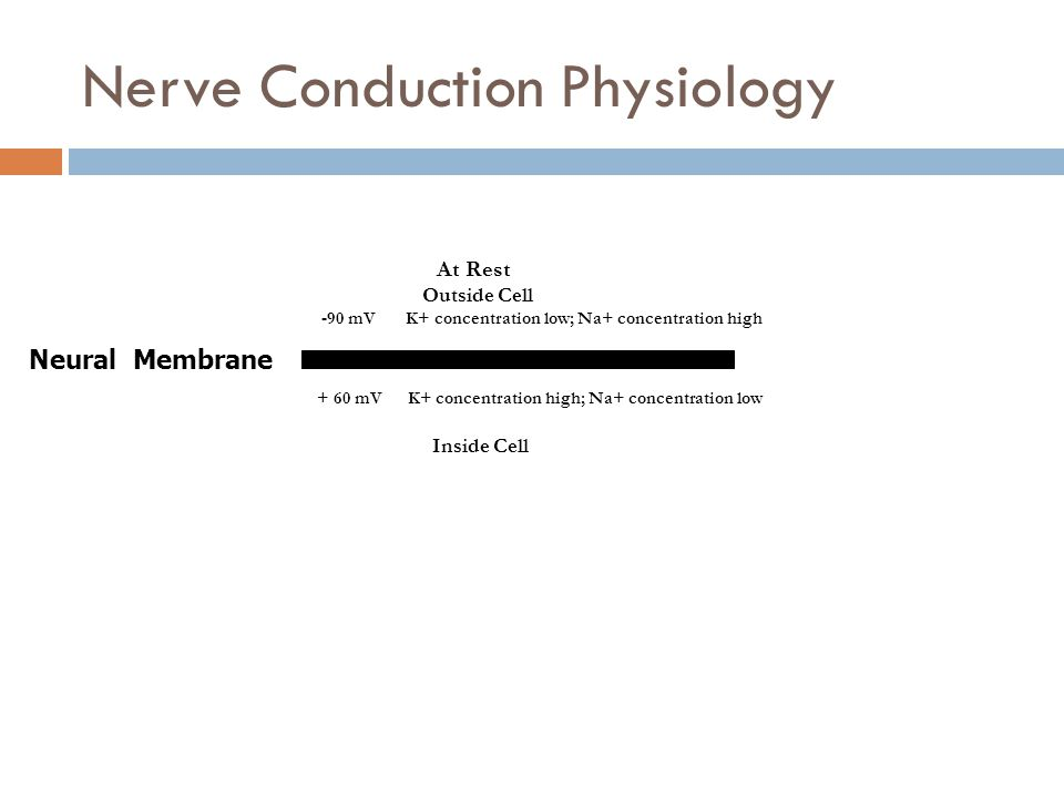Nerve Conduction Physiology At Rest Outside Cell -90 mV K+ concentration low; Na+ concentration high + 60 mV K+ concentration high; Na+ concentration low Inside Cell Neural Membrane