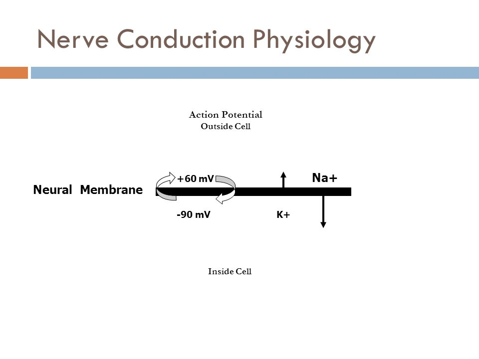 Nerve Conduction Physiology Action Potential Outside Cell Inside Cell Neural Membrane +60 mV Na+ -90 mV K+