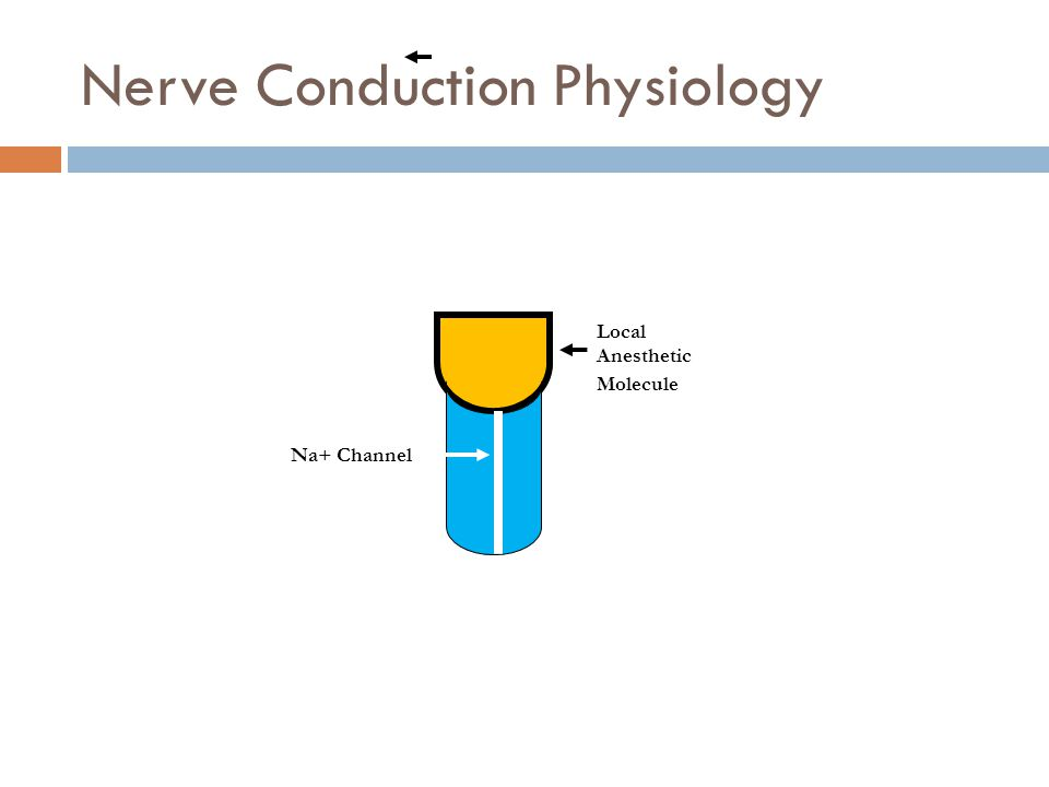Nerve Conduction Physiology Local Anesthetic Molecule Na+ Channel